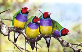 beautiful finches